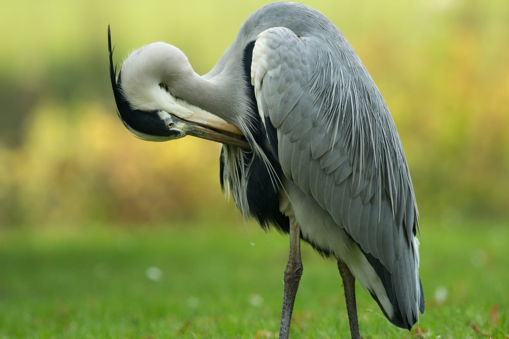 focus photography of long-beaked and long-legged gray bird