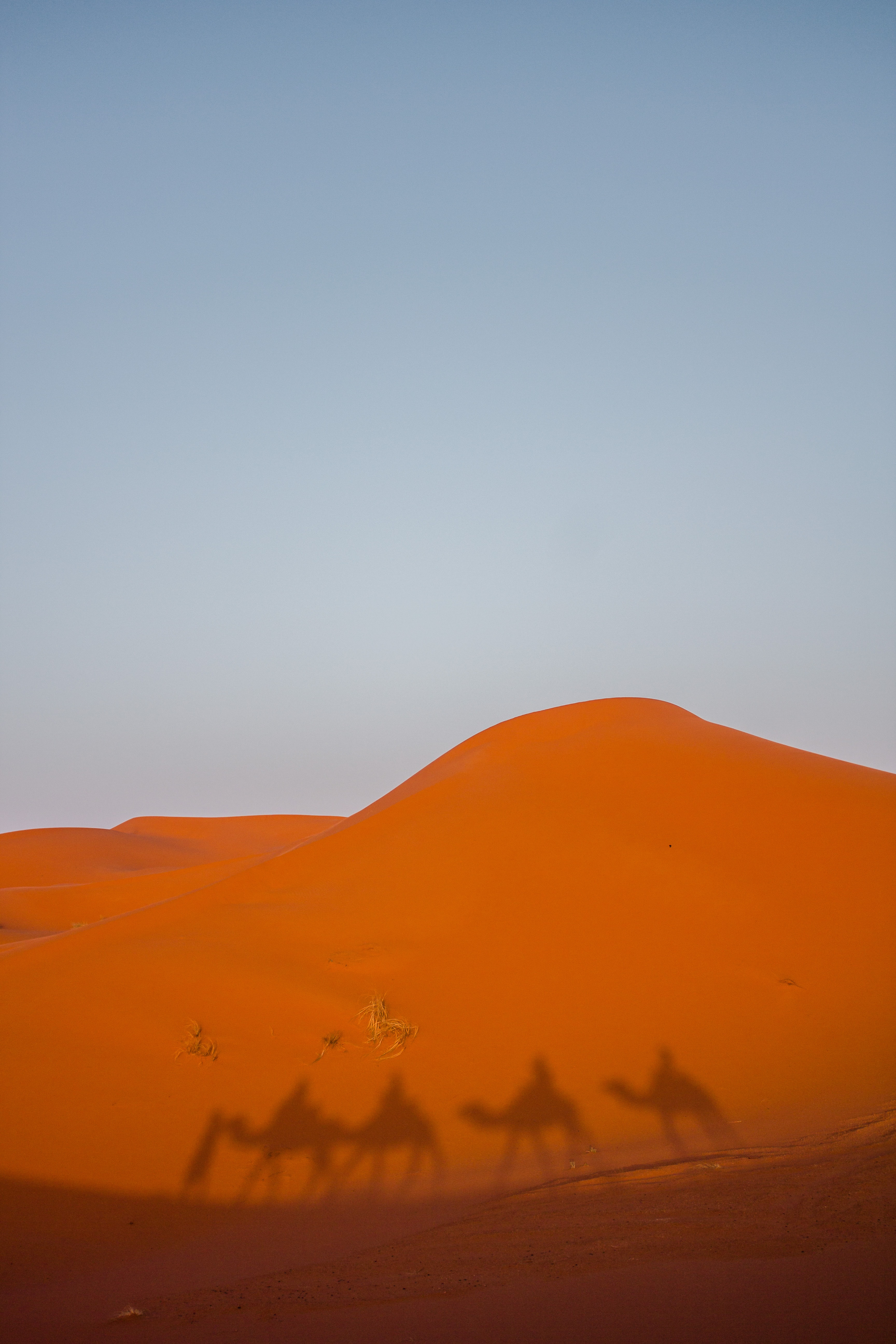 shadow of camel in desert under blue sky