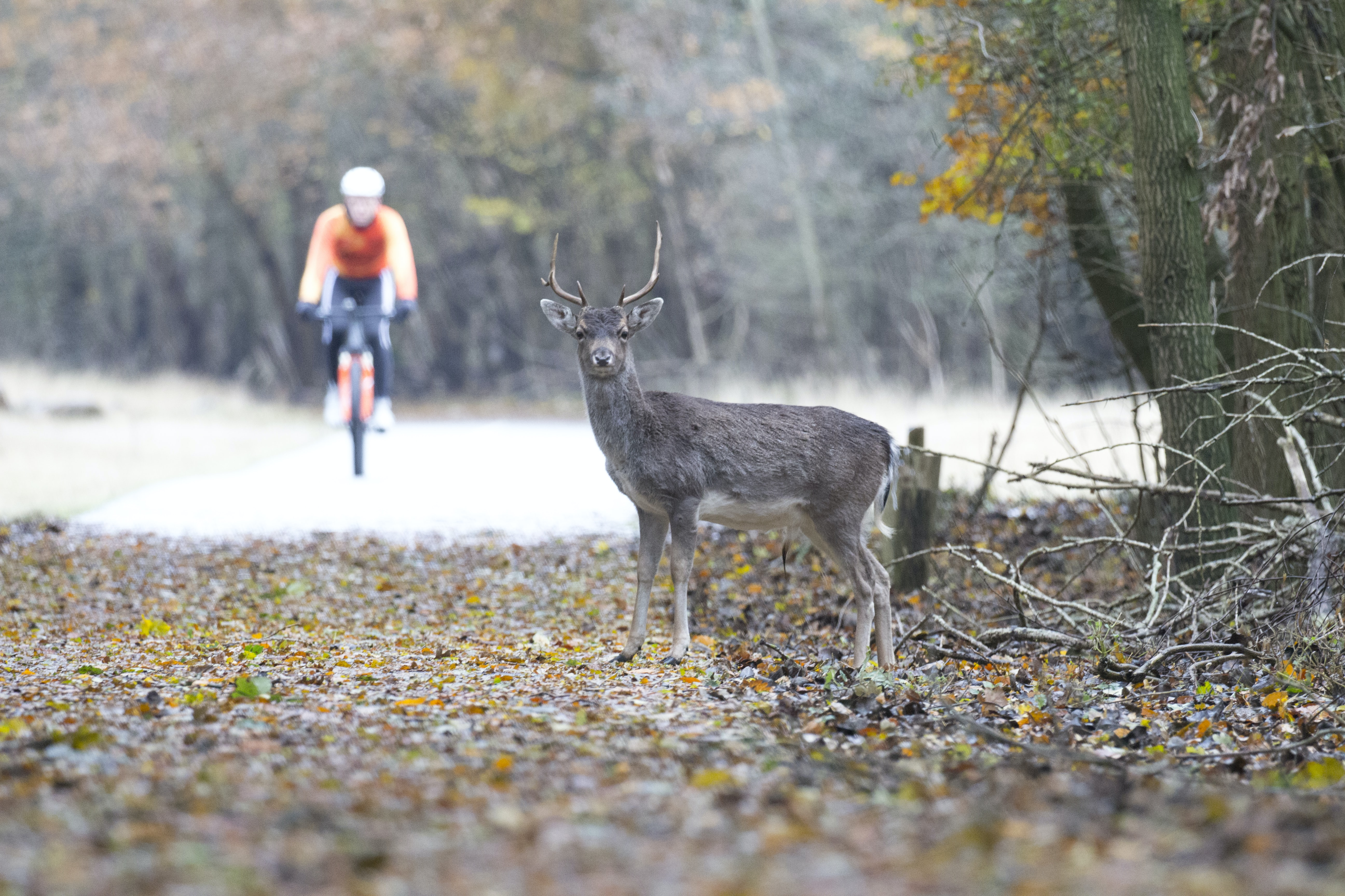man riding bike near gray deer at daytime