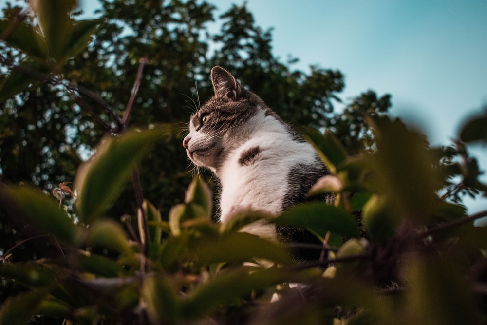 shallow focus photo of cat on grass