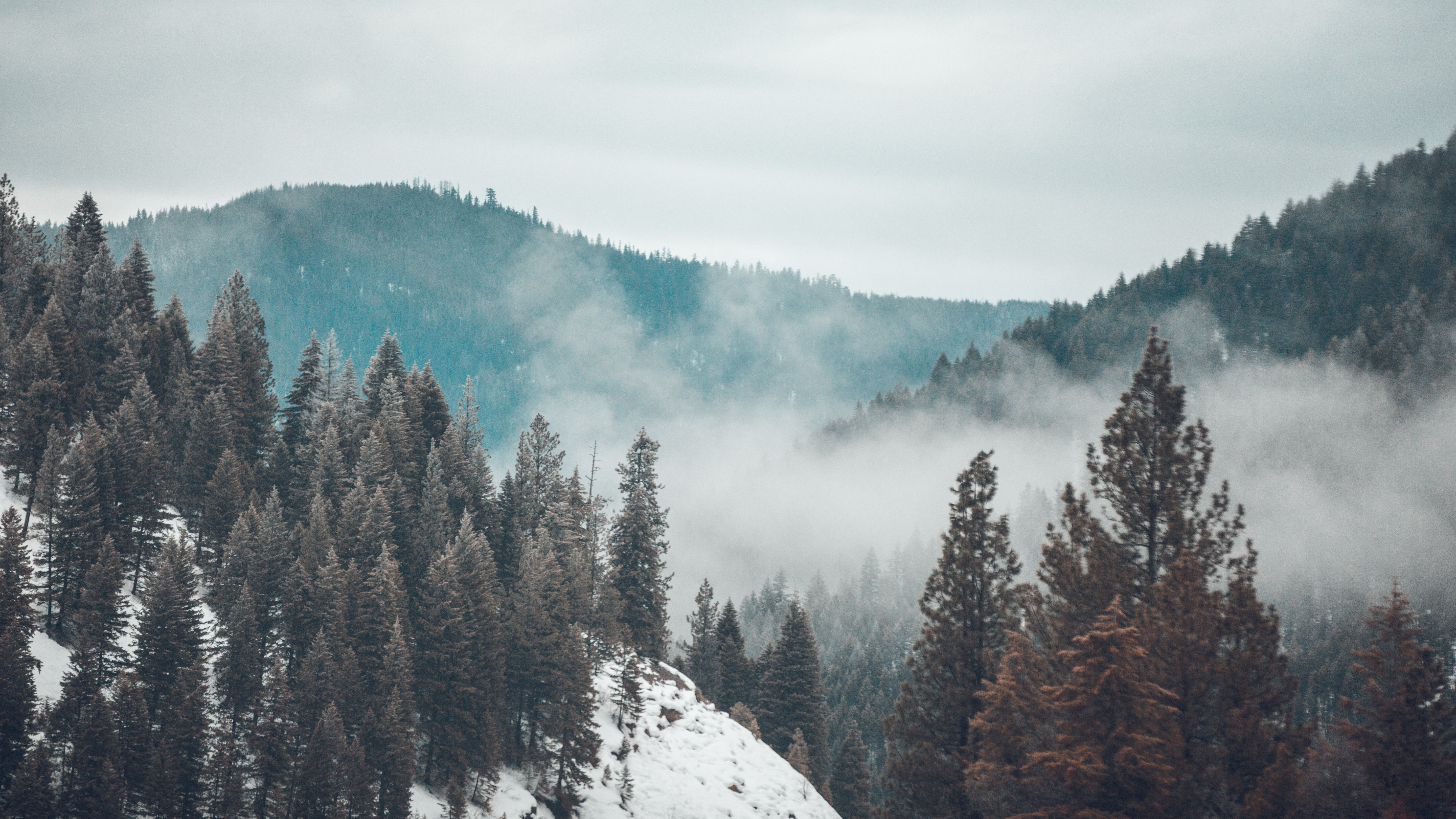 forest mountain with fog