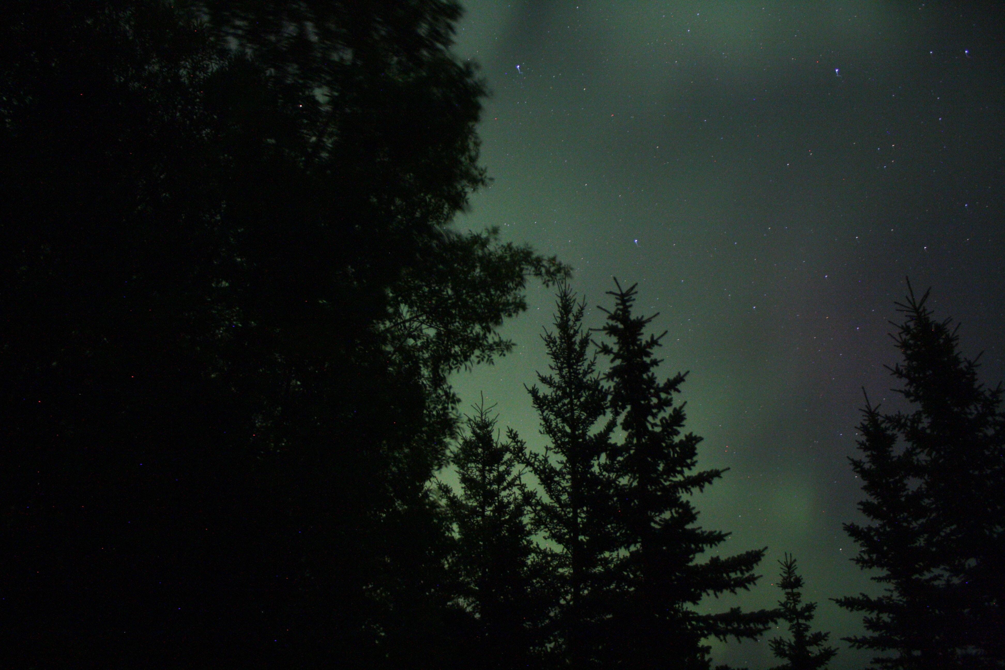 green trees under starry night