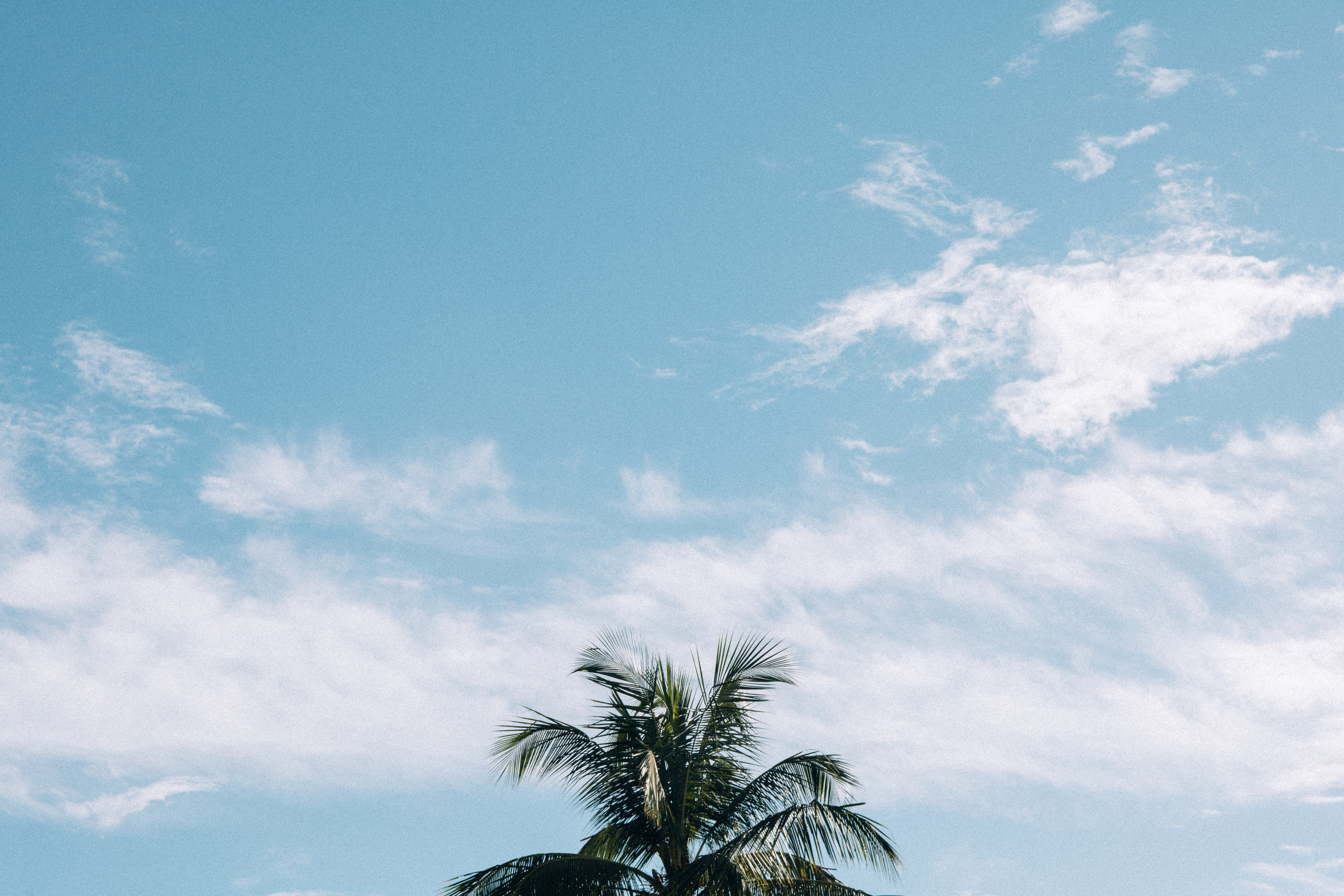 coconut palm tree under cloudy blue sky