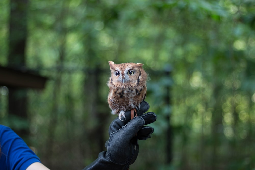 brown baby owl perched on leather goblet