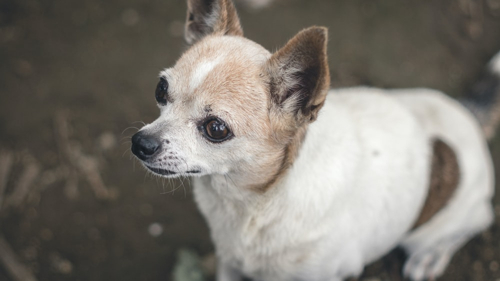 selective focus photography of dog