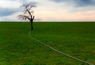 gray hose on grass field from leafless tree surrealism zoom background