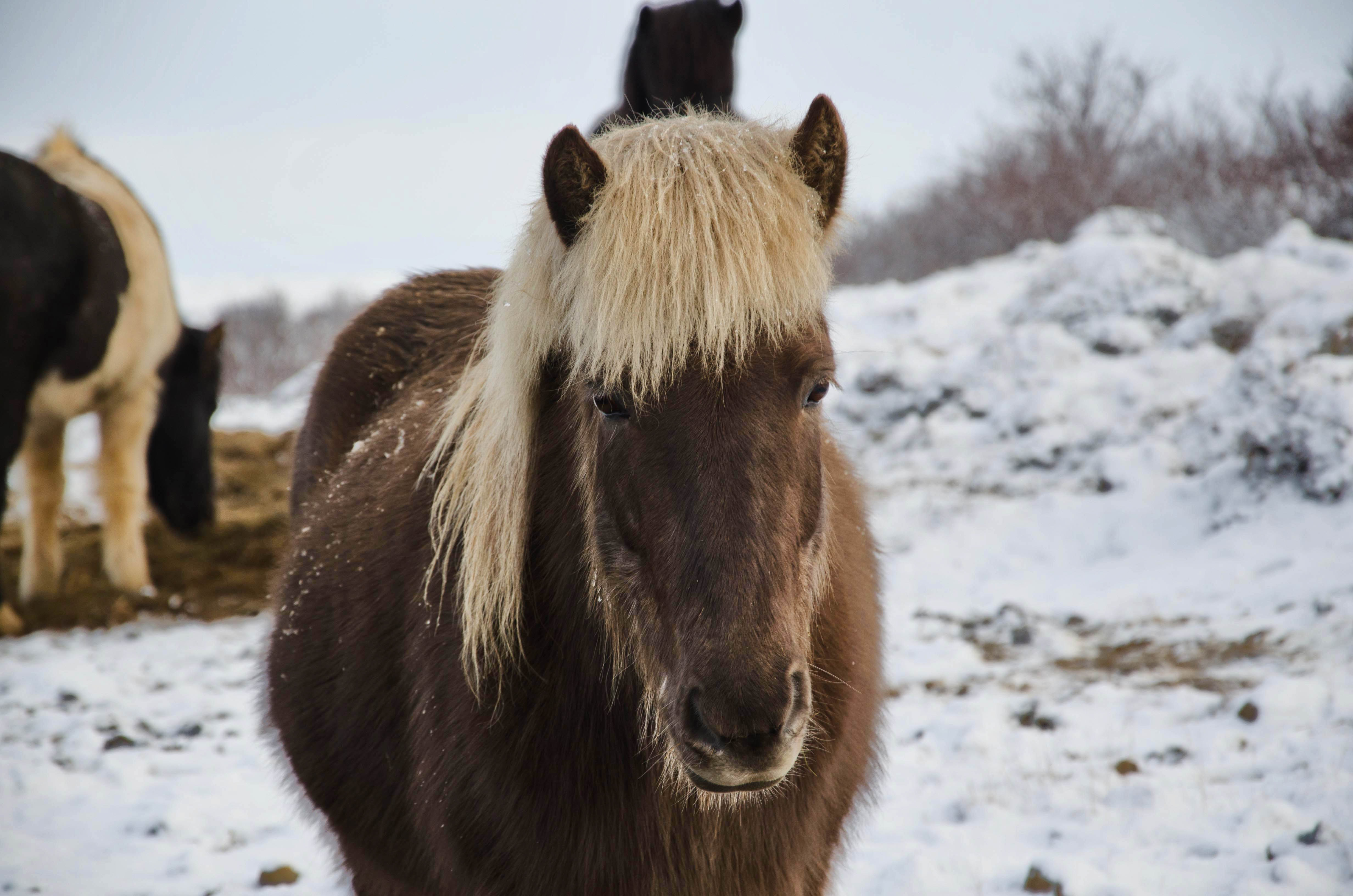 black horse on snow covered ground