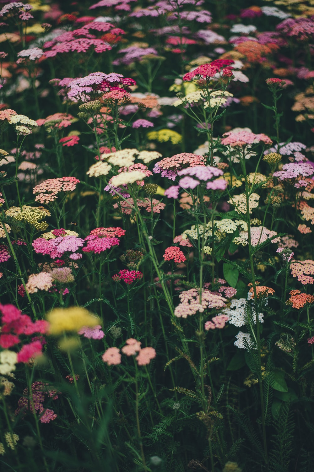 multicolored flowers during daytime