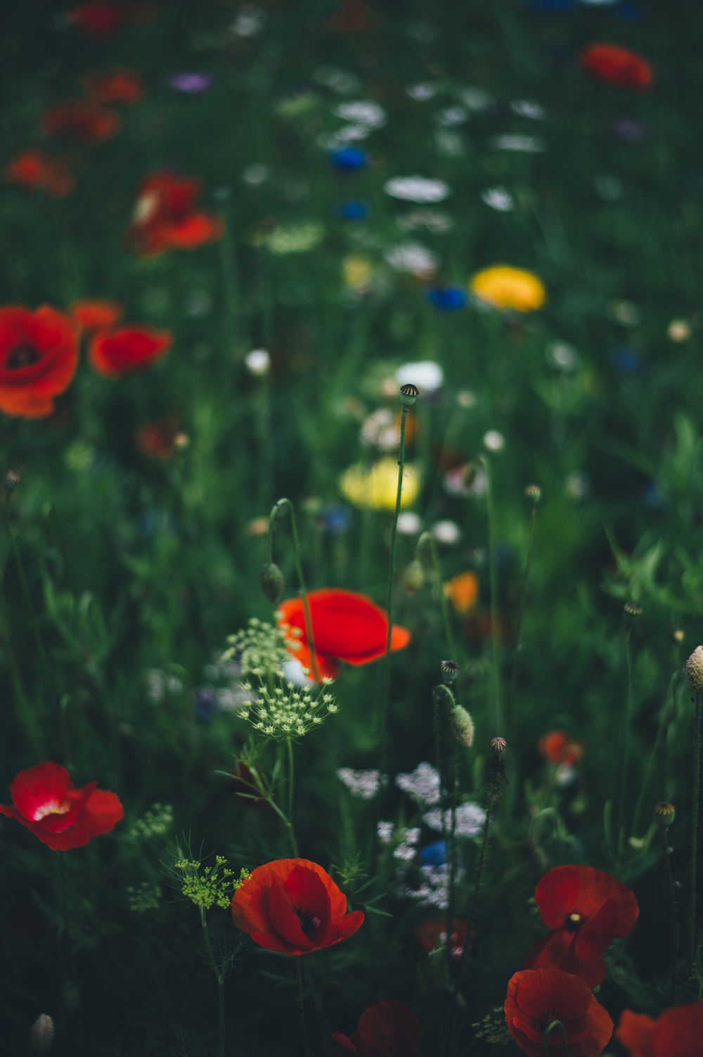 selective focus photography of flower garden