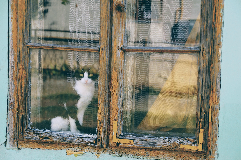 cat looking through window during daytime