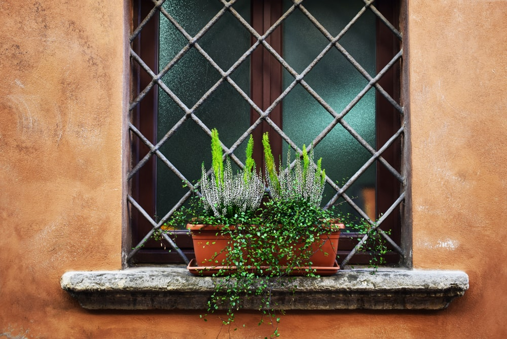 green leaf plants in brown pot on window