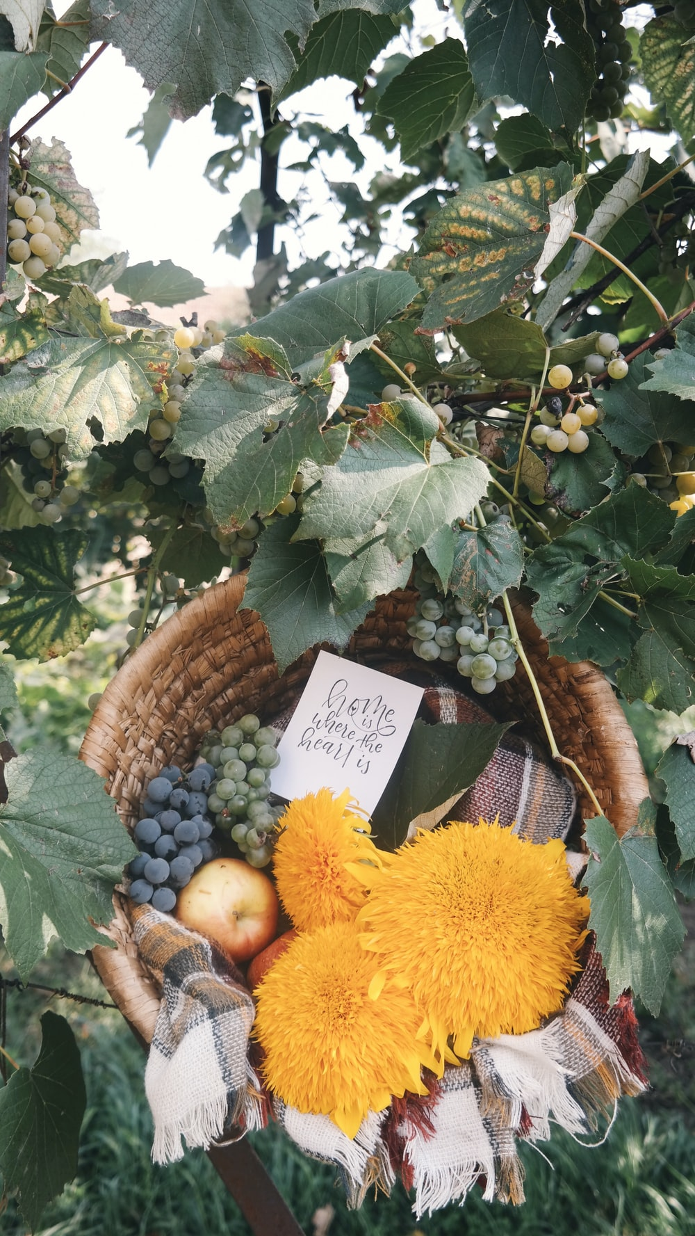 assorted fruits in brown basket
