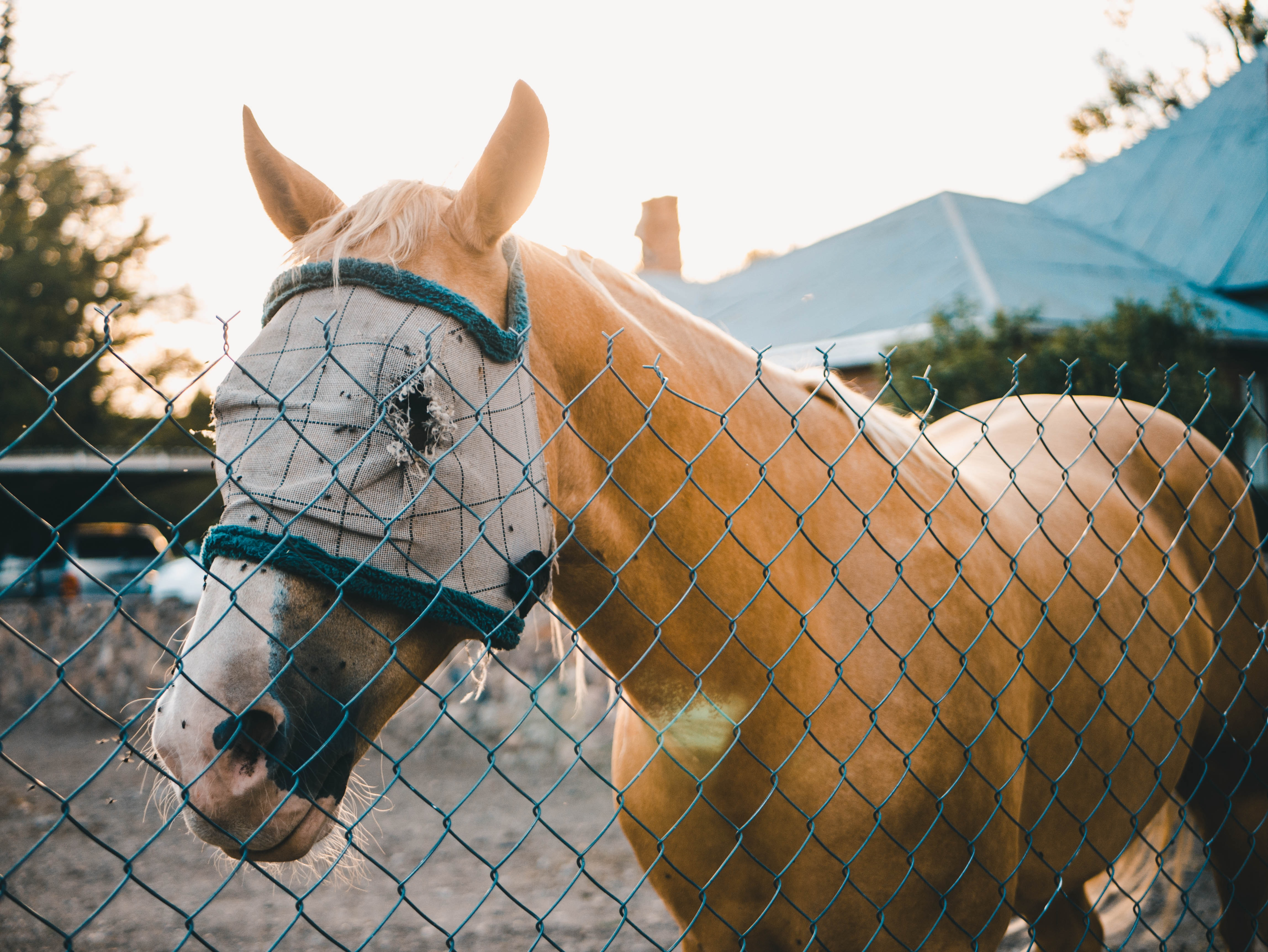 brown horse beside the chain link fence