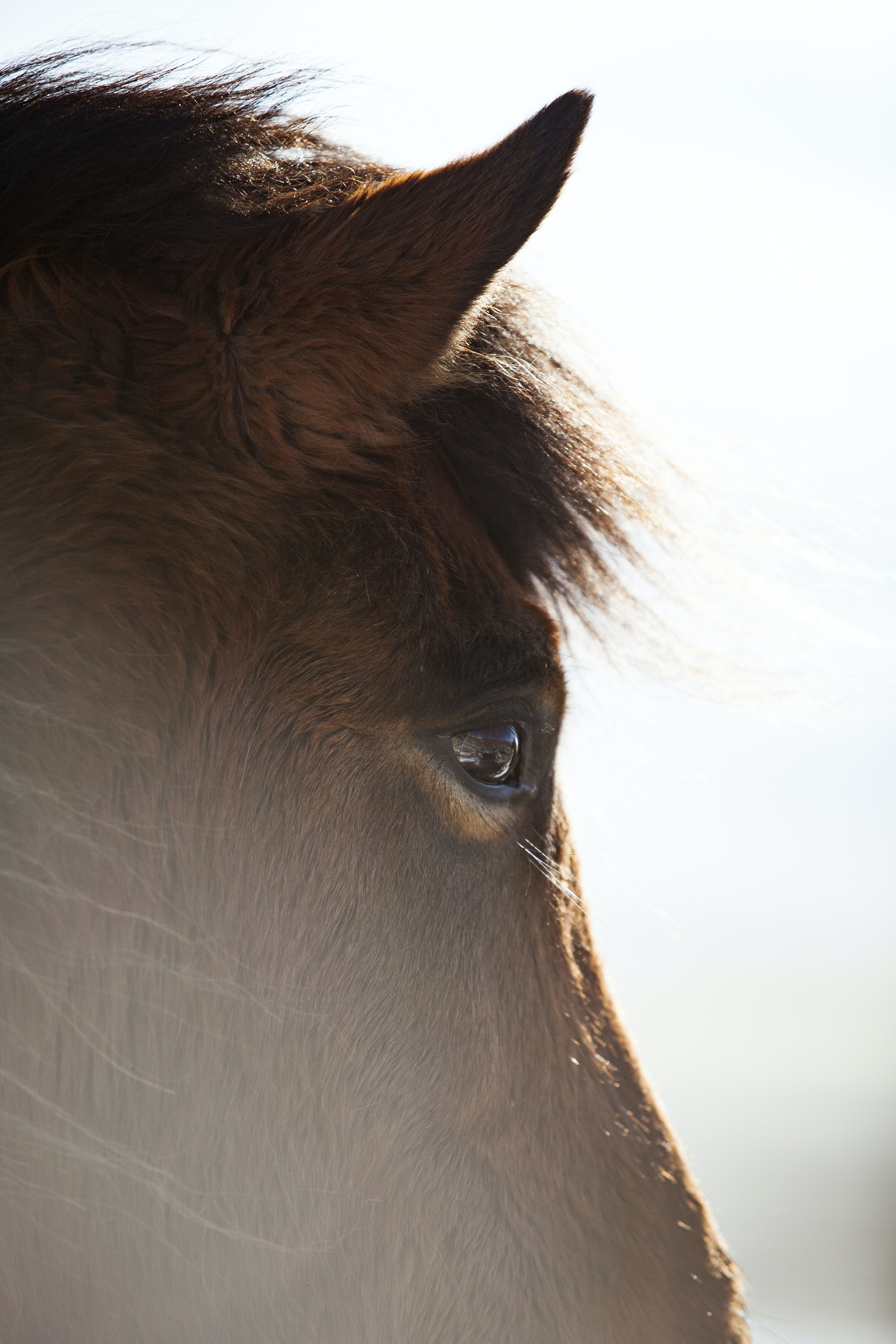 selective focus photography of horse face