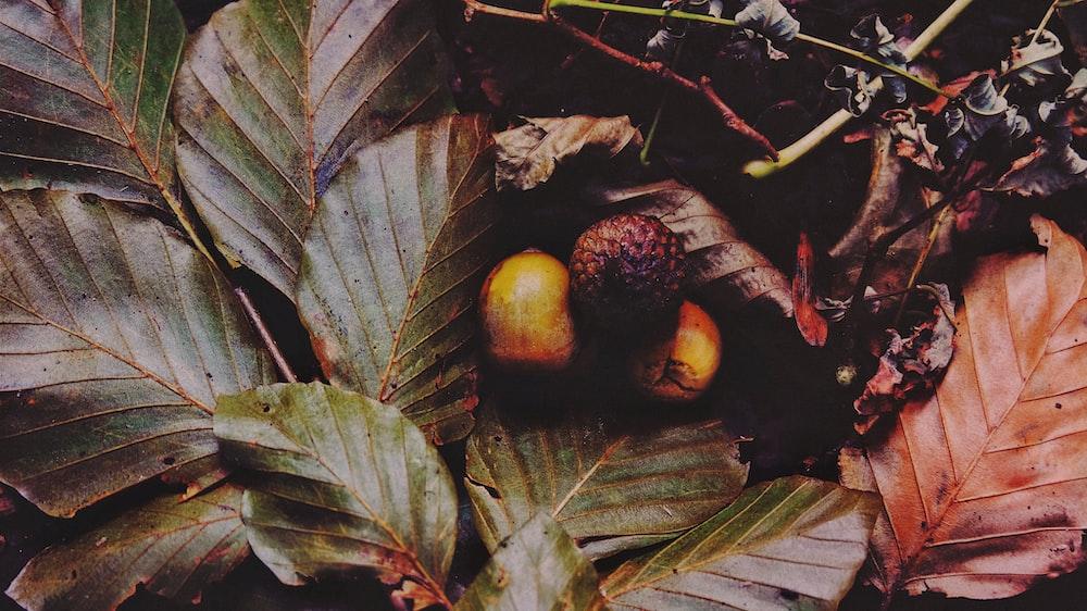 round fruit between leaves