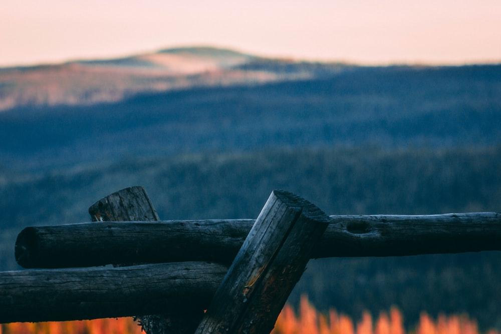 tilt shift lens photography of gray wooden tree log