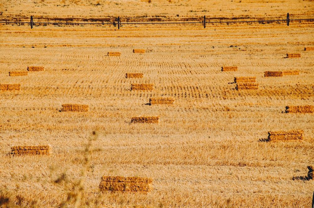 brown dry hay ground