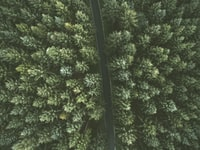 aerial view of concrete road between trees