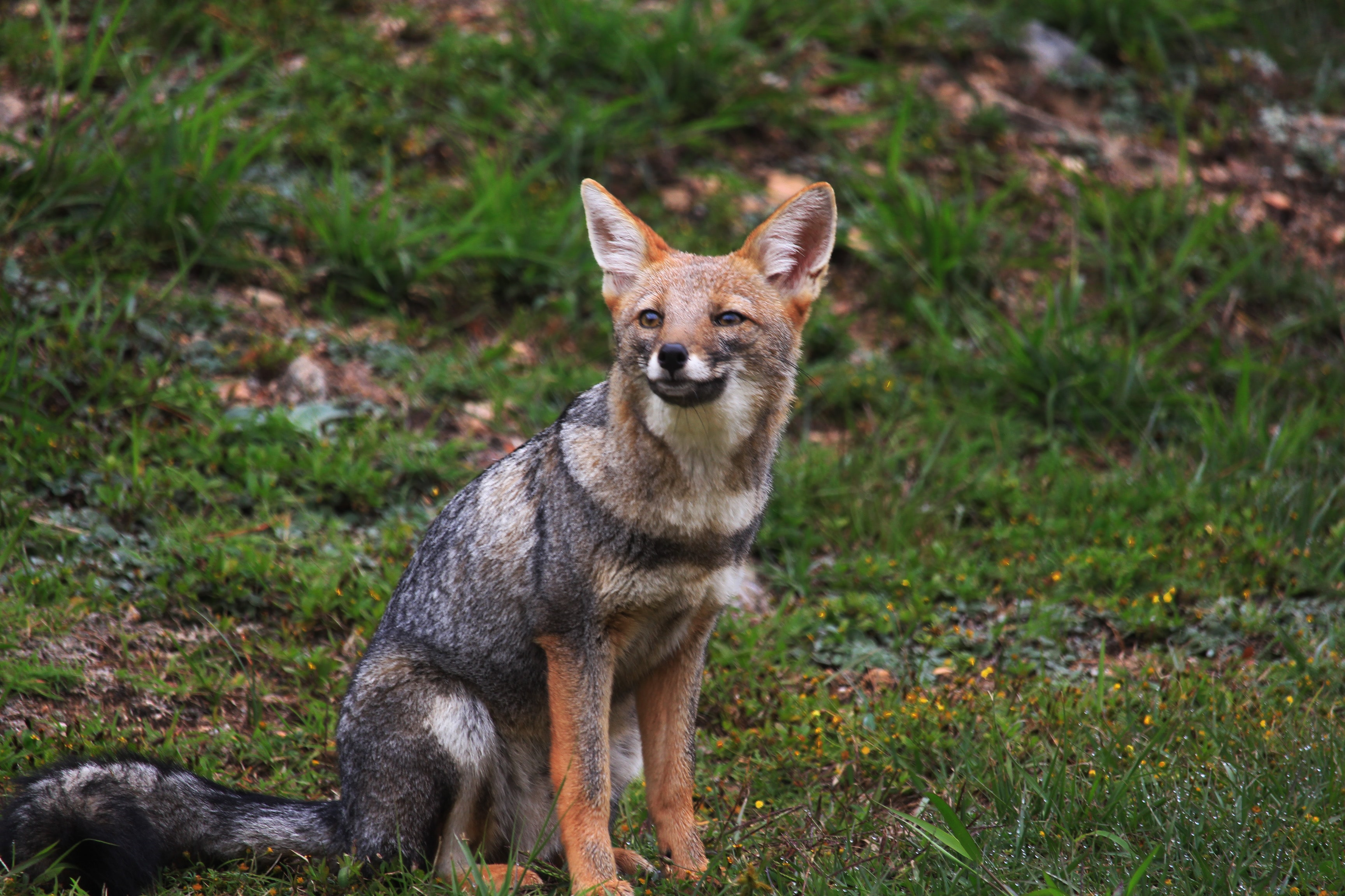selective focus photography of fox