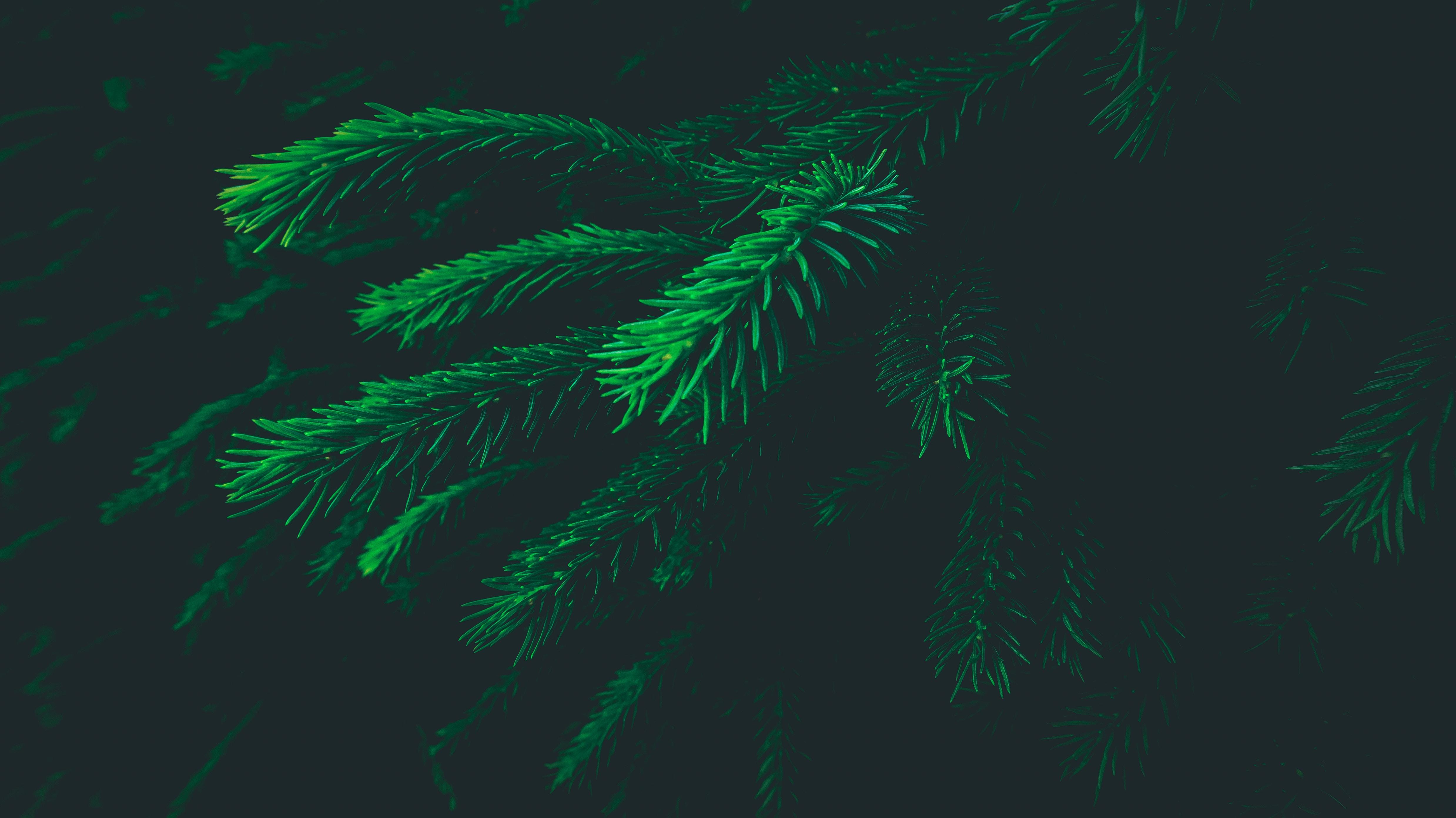 macro shot photography of green plants