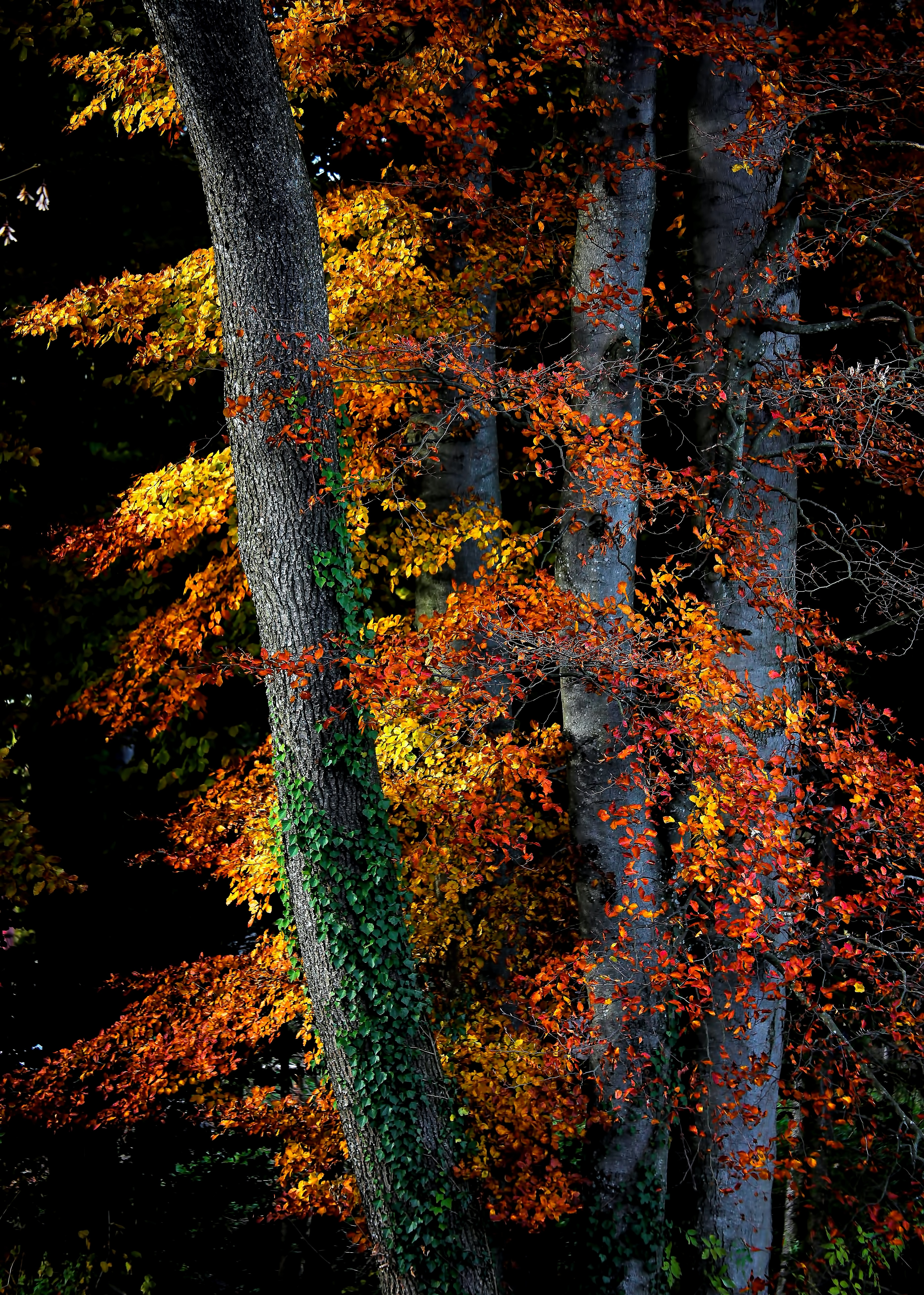 close-up photography o brown leafed trees at daytime