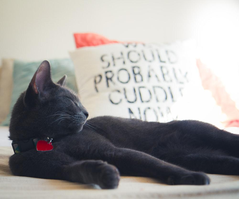 shallow focus photo of black cat