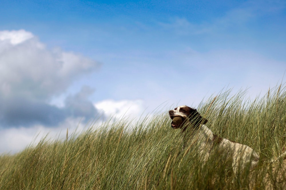 white and black dog surrounded by green grass during daytime