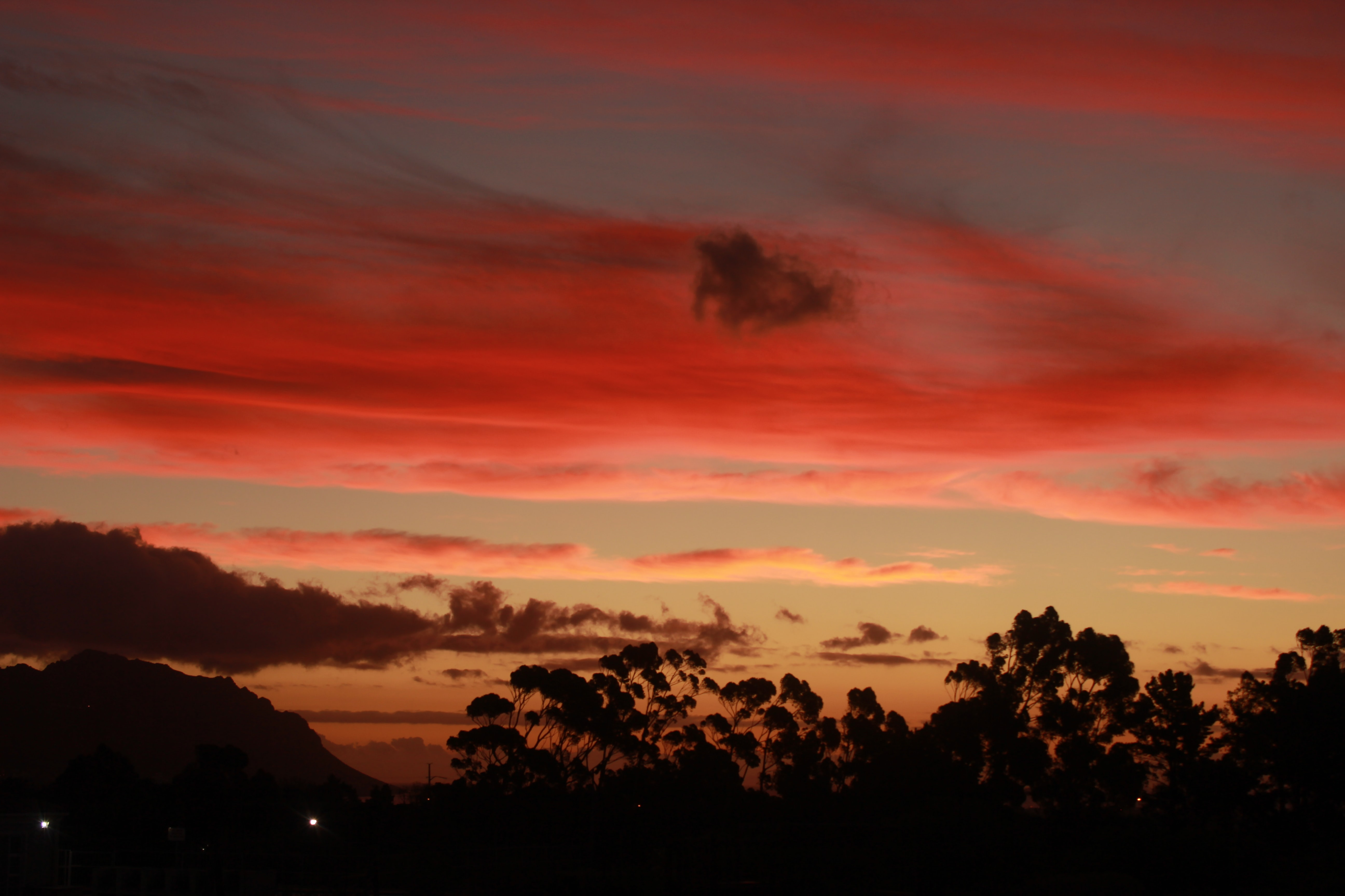 silhouette of trees under red clouds