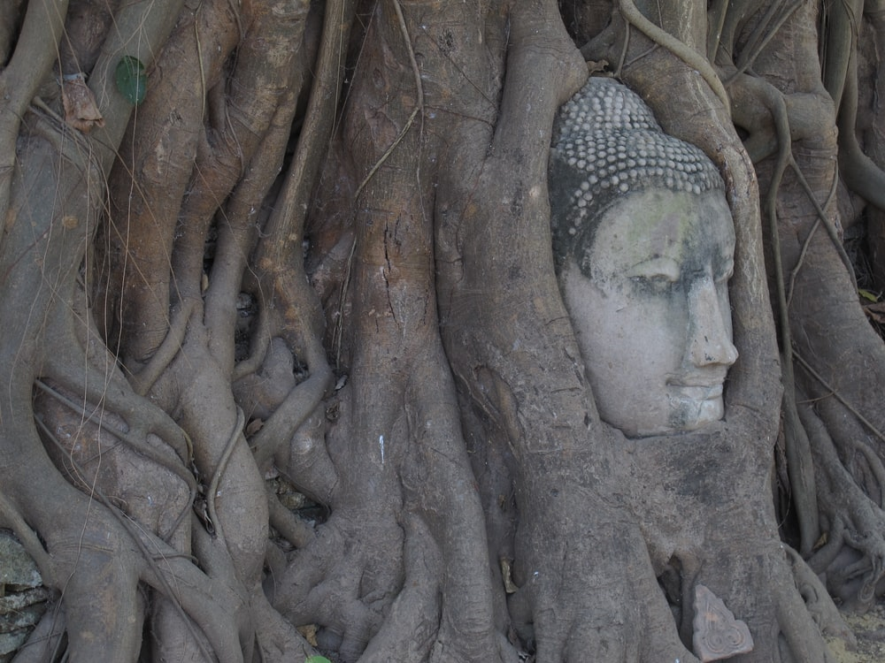 brown tree roots with gray statue