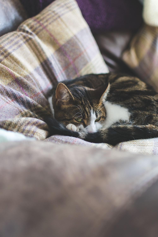 short-fur black cat lying on gray bedspread