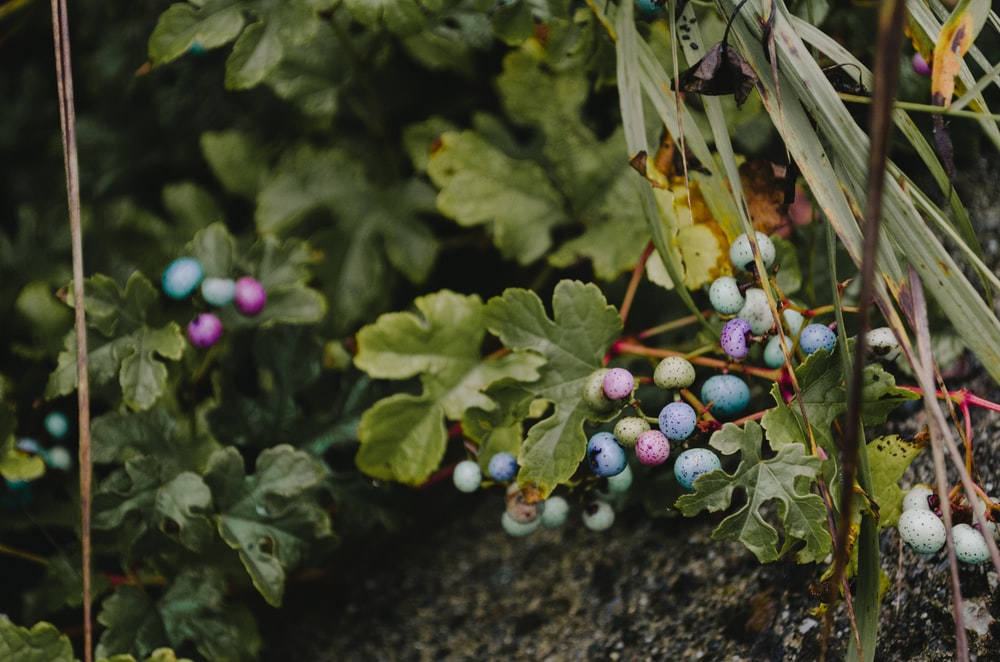 shallow focus photography of green leafed plants with fruits
