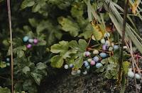 Pastel Berries in the Wild