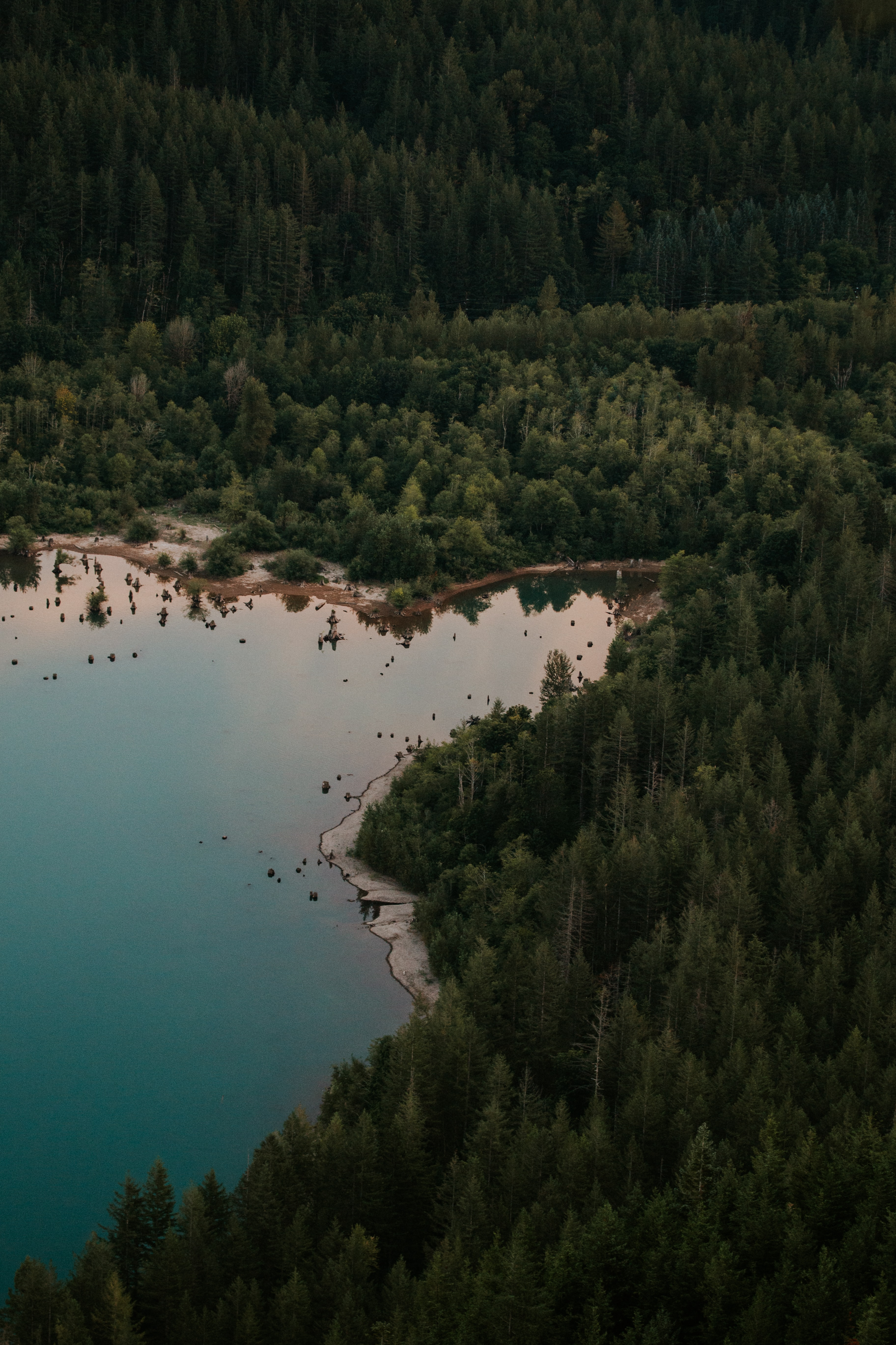aerial view of green forest near body of water