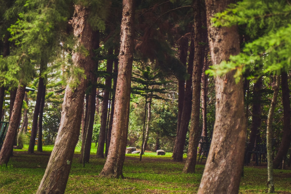 green leafed trees photography