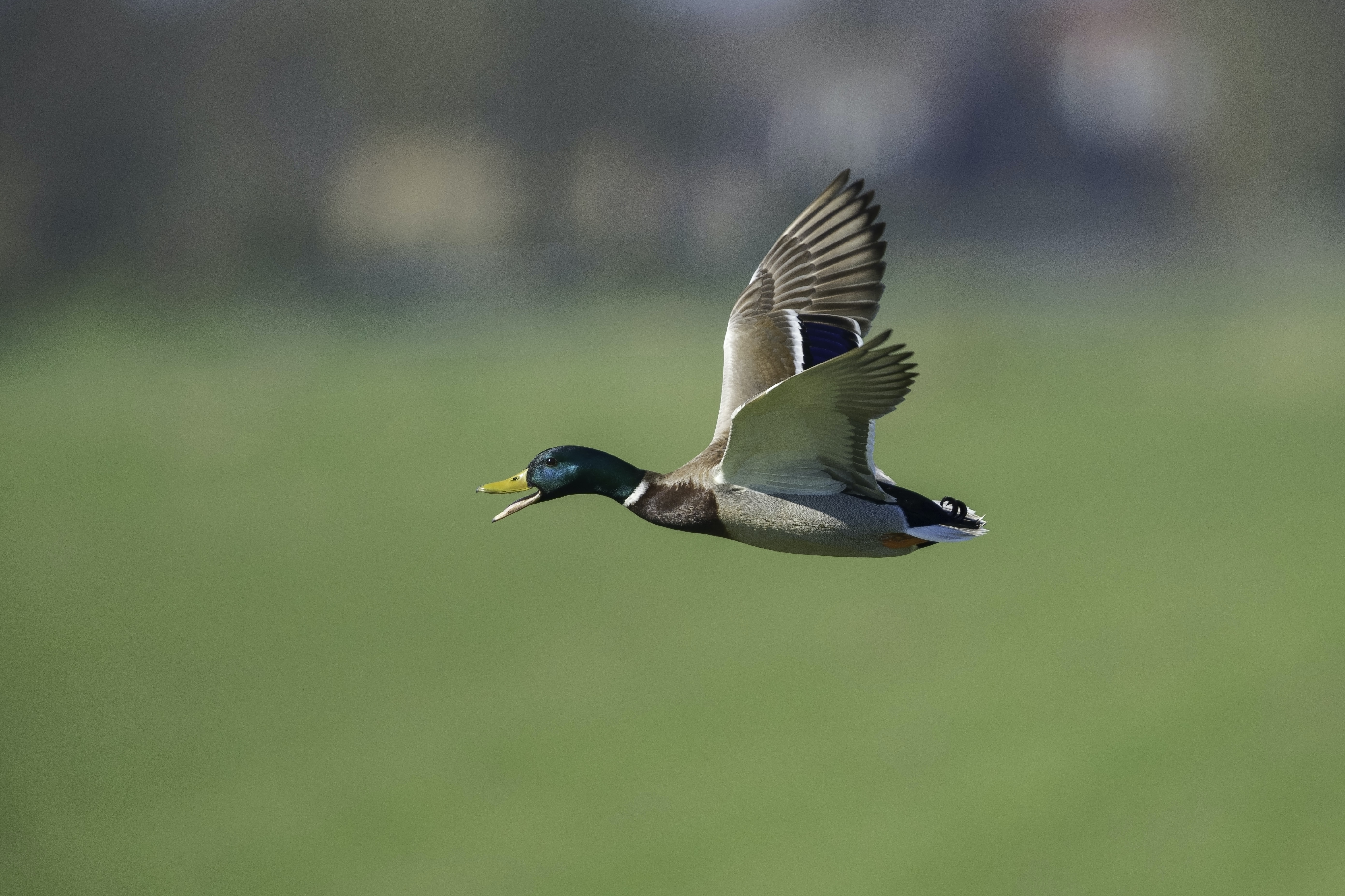 shallow focus photo of flying goose