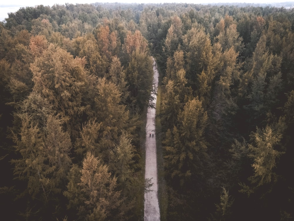 aerial view of road surrounded by tall trees