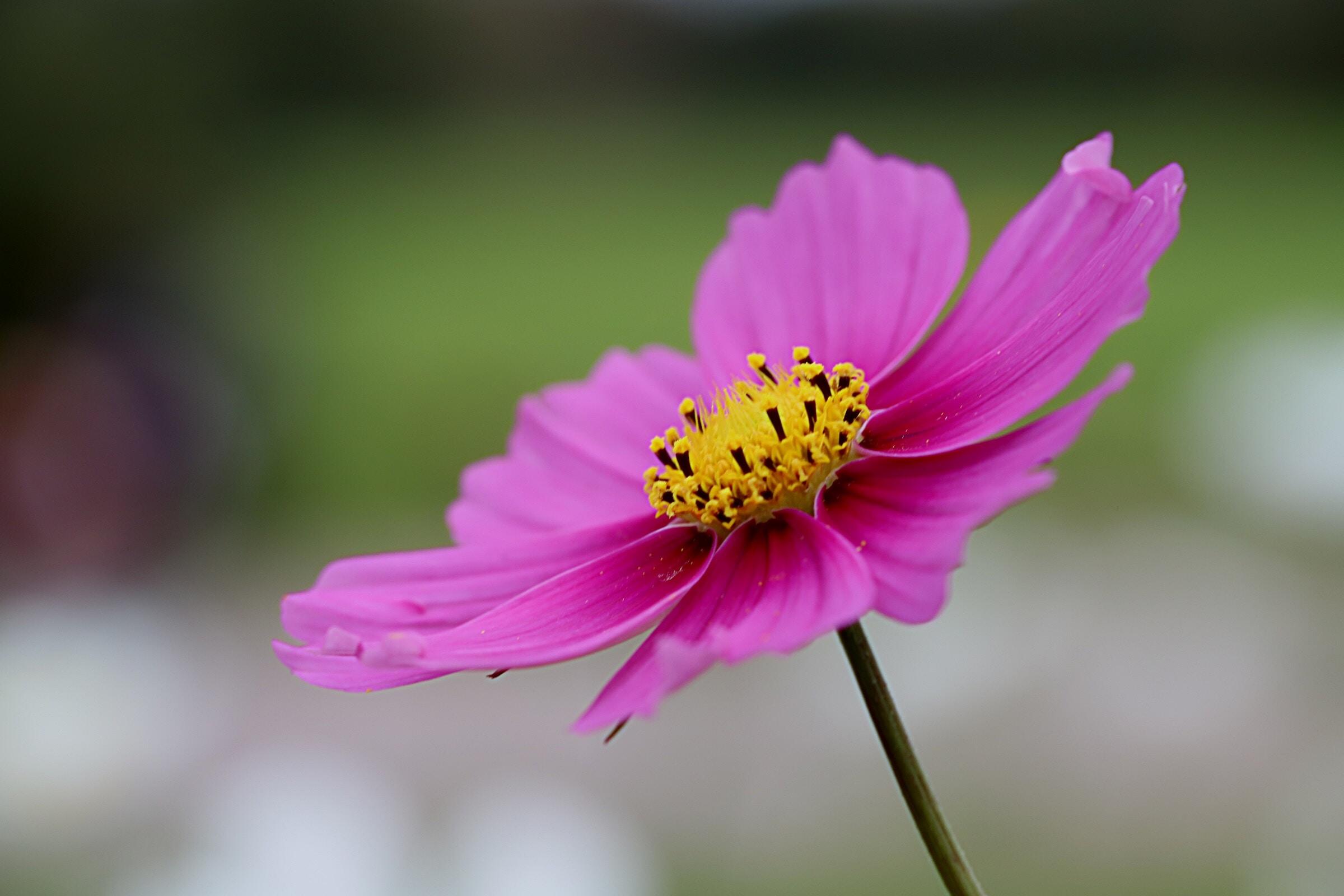 closeup photo of purple petaled flower