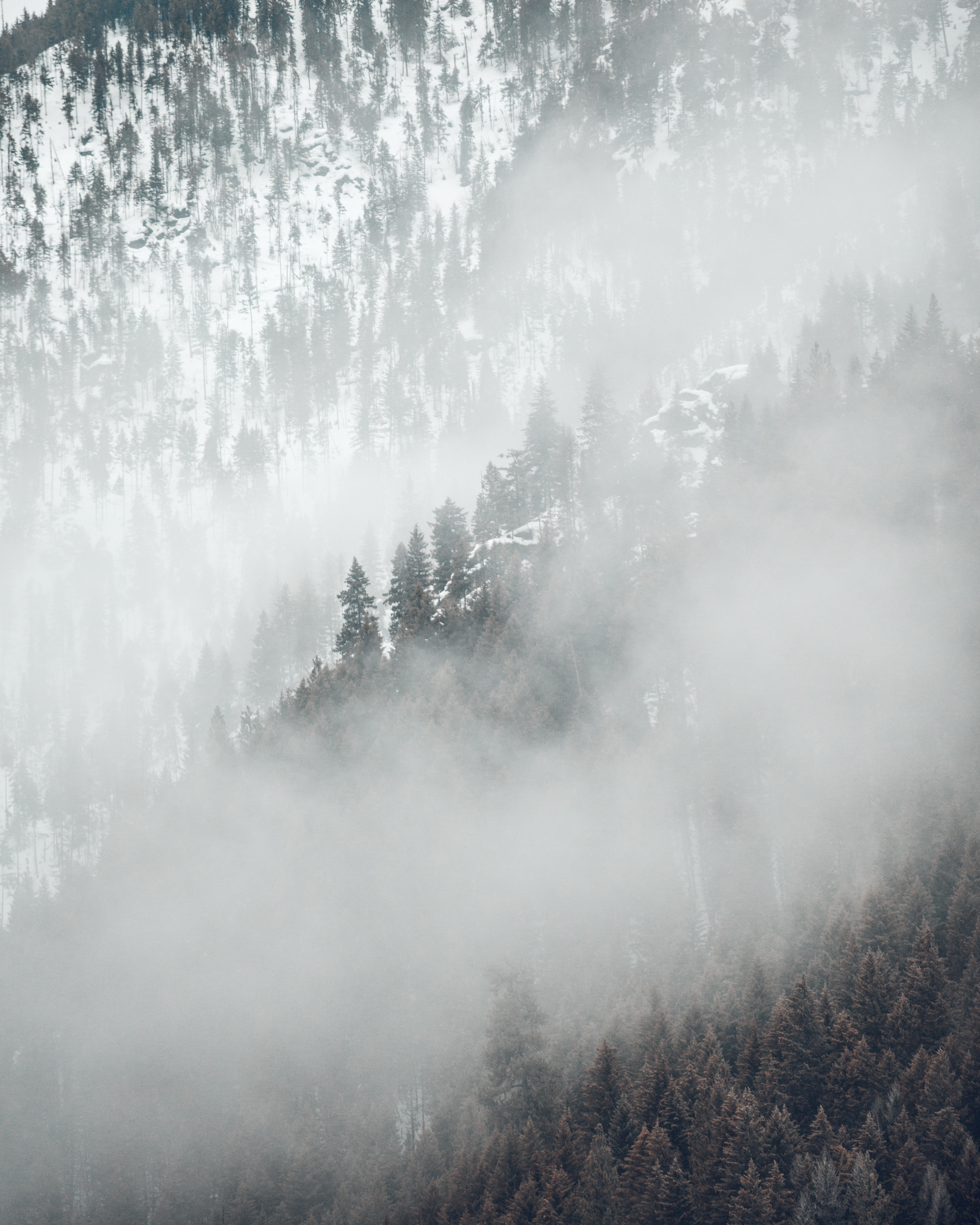 aerial photography of trees on mountains covered with fog at daytime