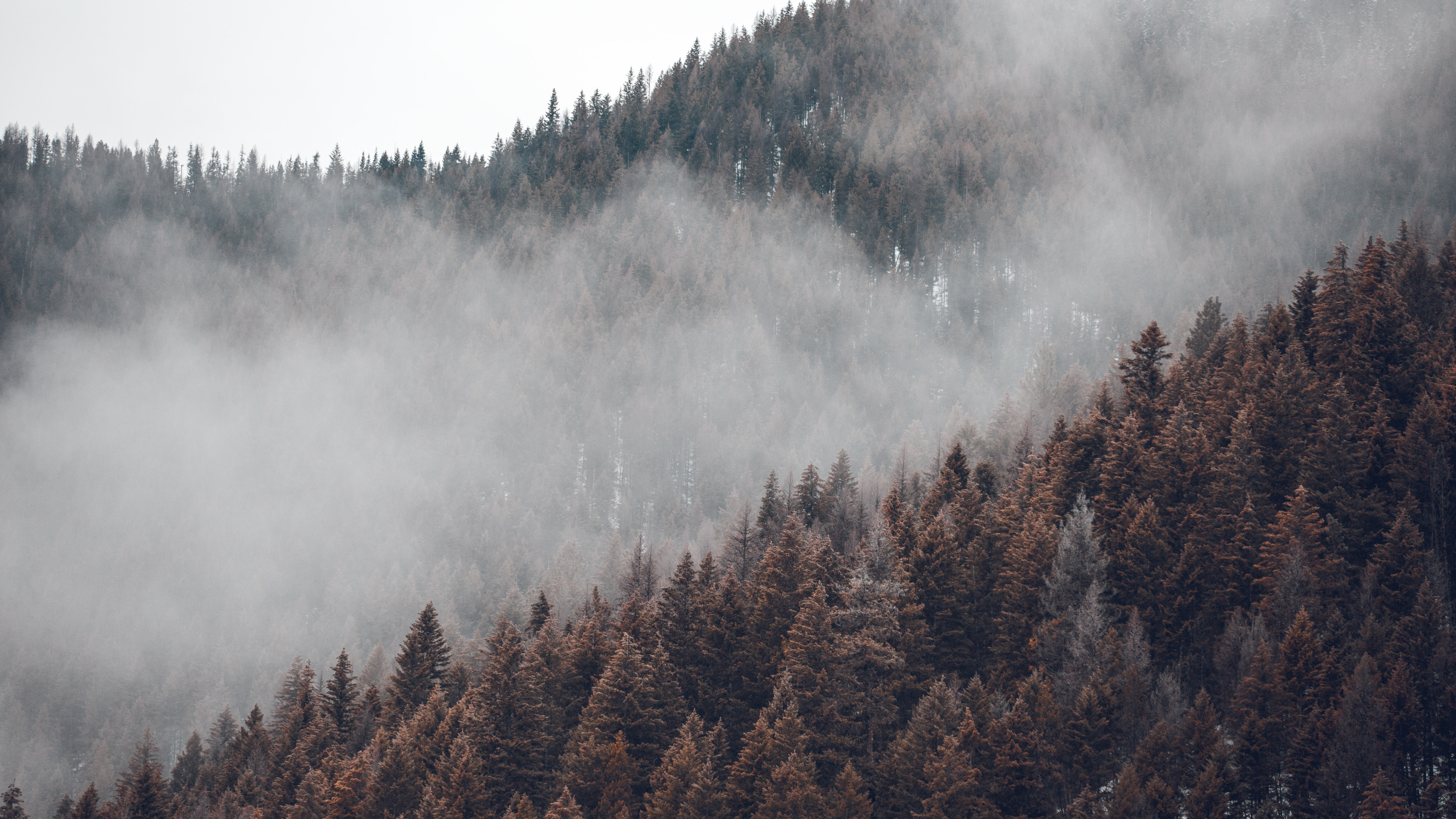 pine trees covered with fog during daytime