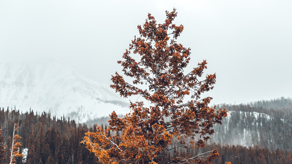 orange leafed tree in middle of forest during daytime