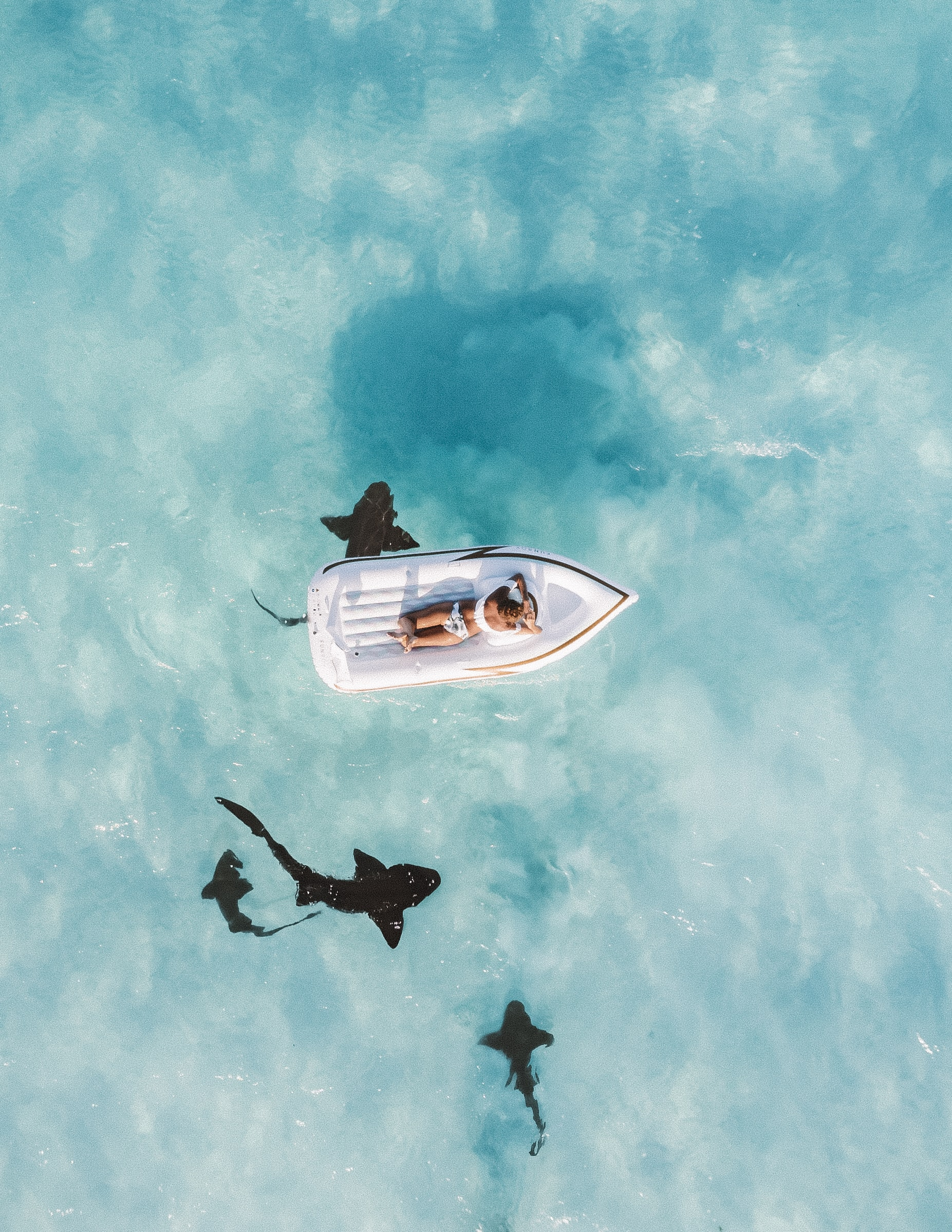 Sharks in the Bahamas