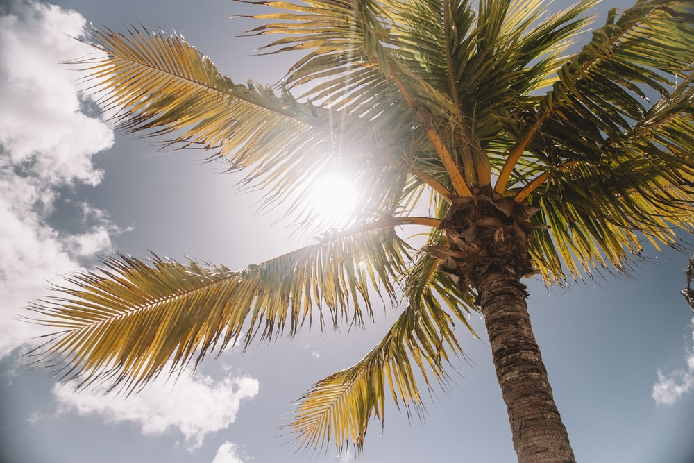 low-angle photography of palm tree during daytime