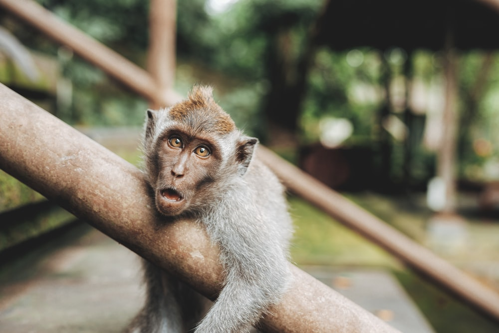 Monkey pictures download free images on unsplash 166 voltagebd Choice Image