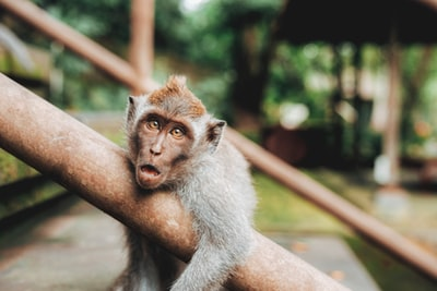 shallow focus photography of monkey hugging handrail funny zoom background