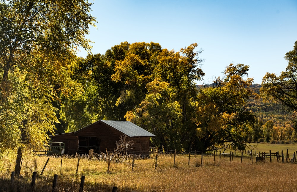brown wooden house near yellow tree during daytime