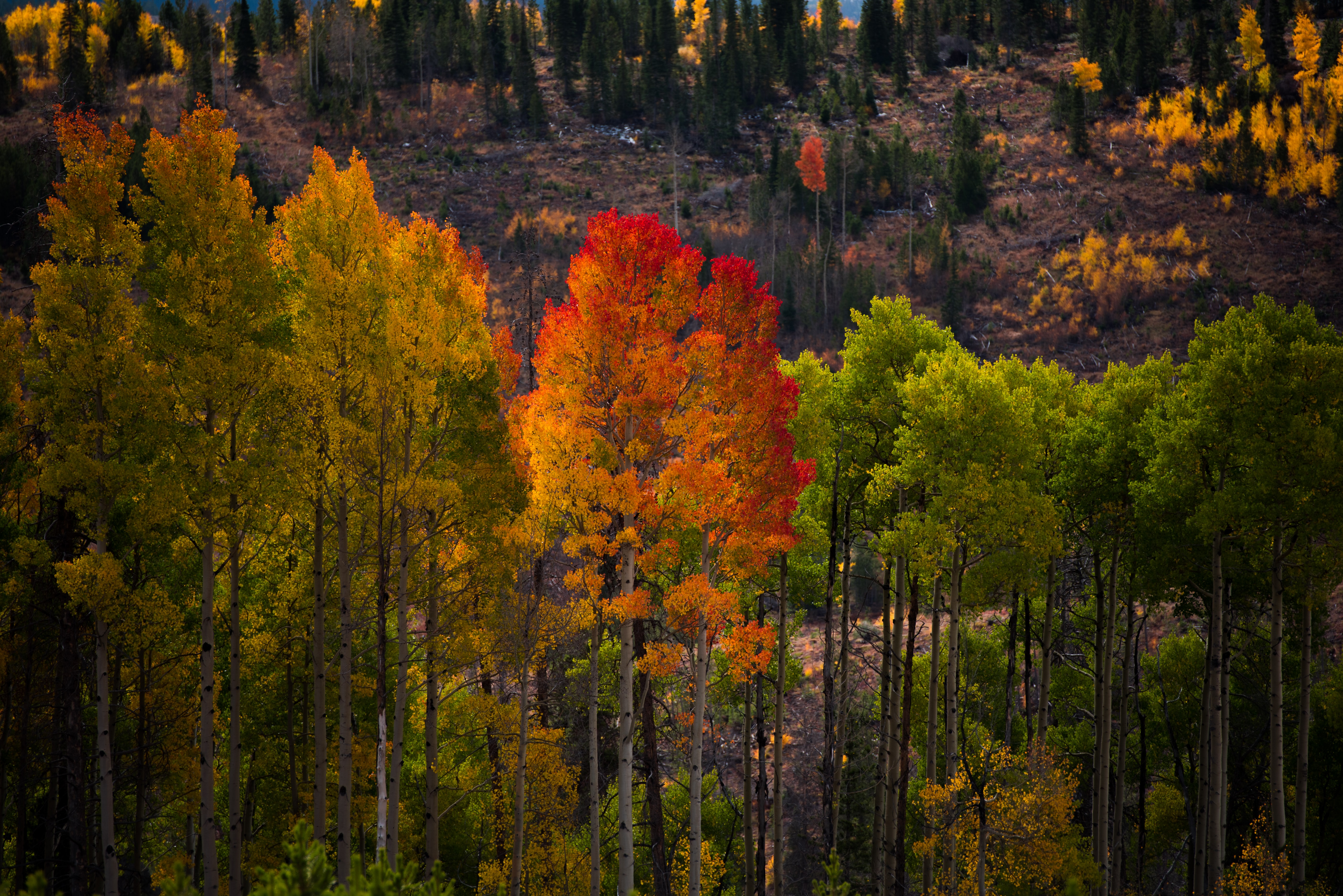 landscape photography of green and red trees