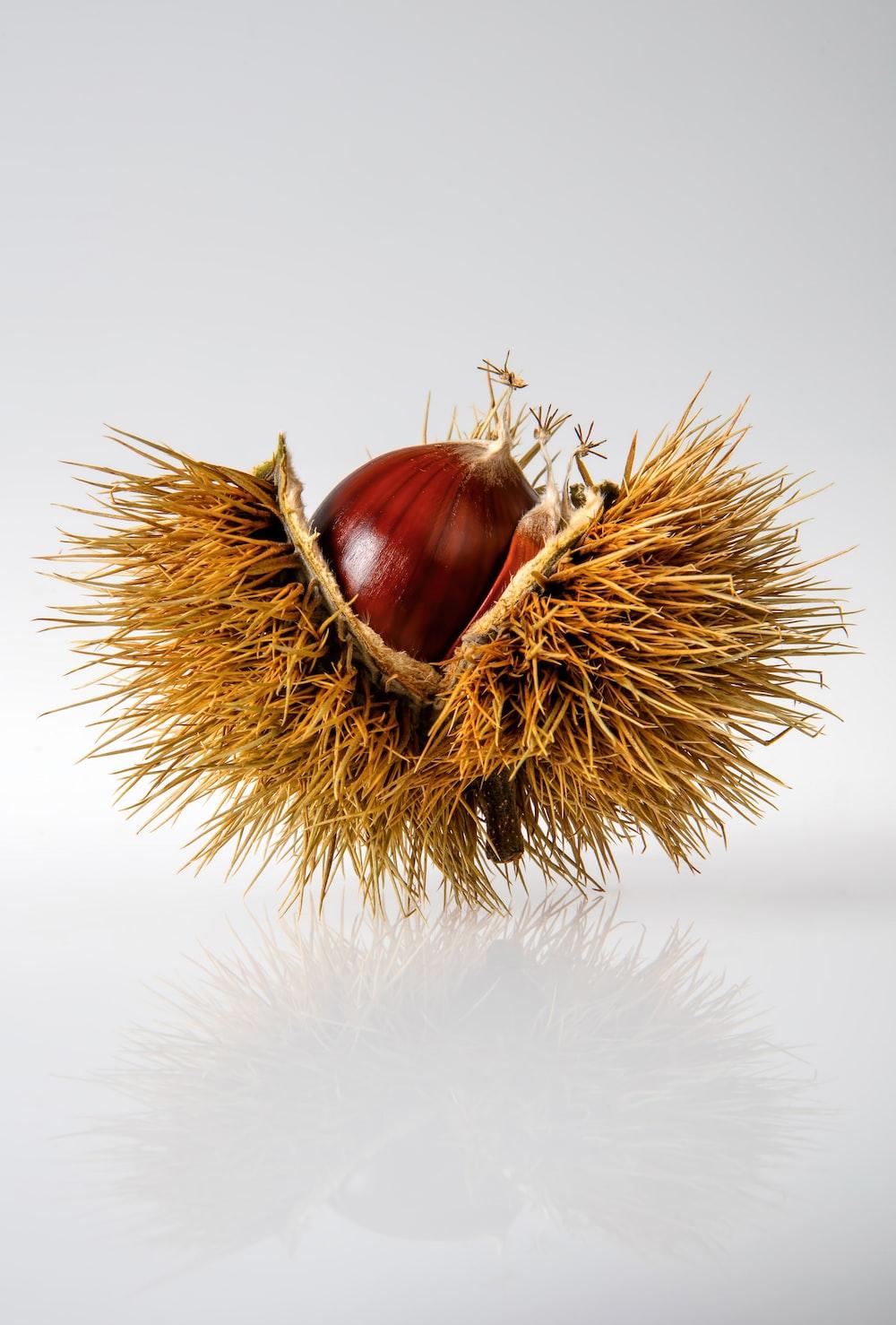 red onion on hays