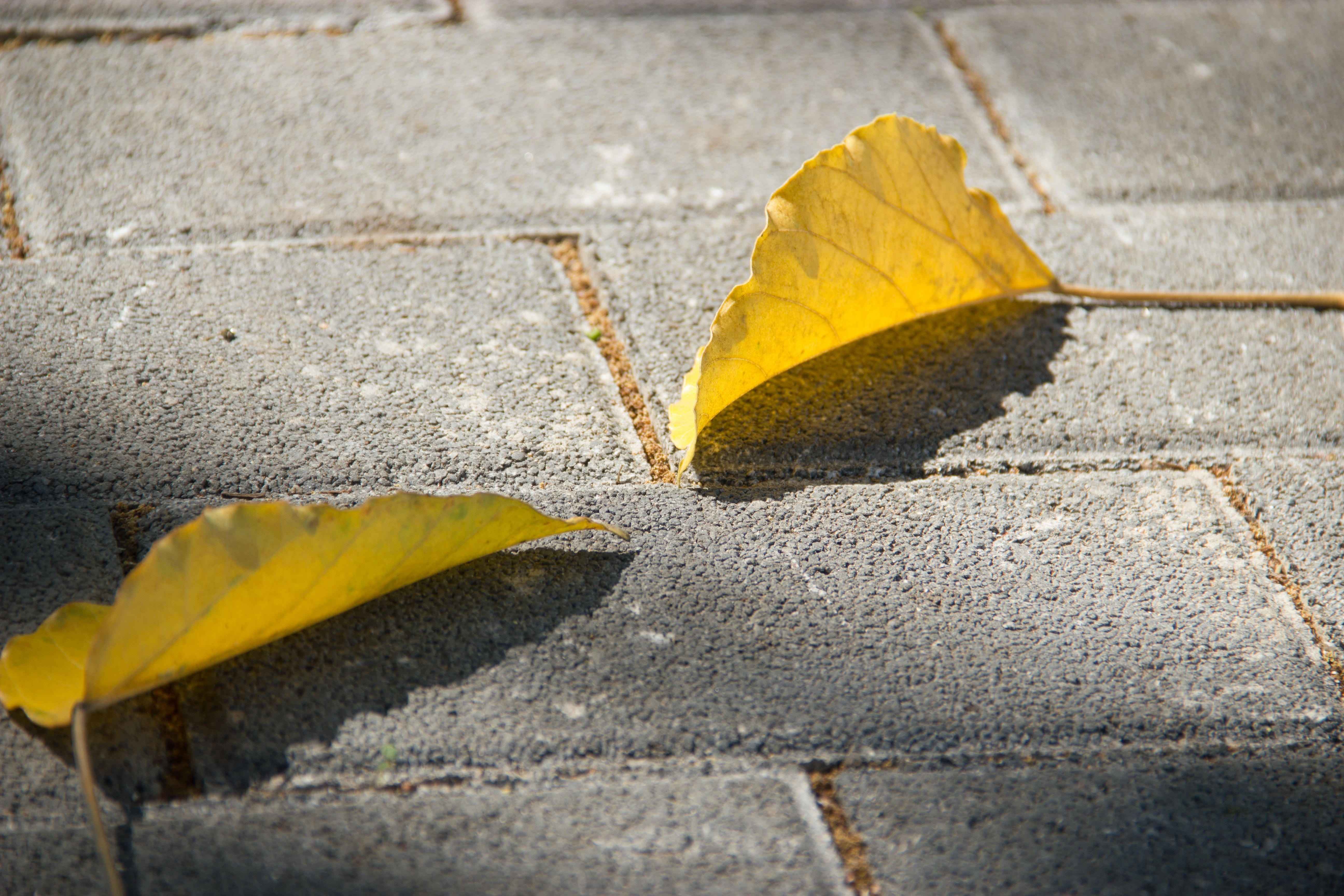 yellow yellow leaves of grey pavement
