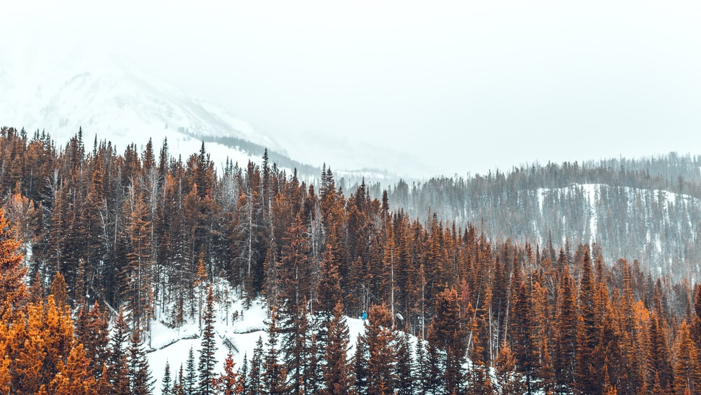 landscape photography of snowy mountain and trees