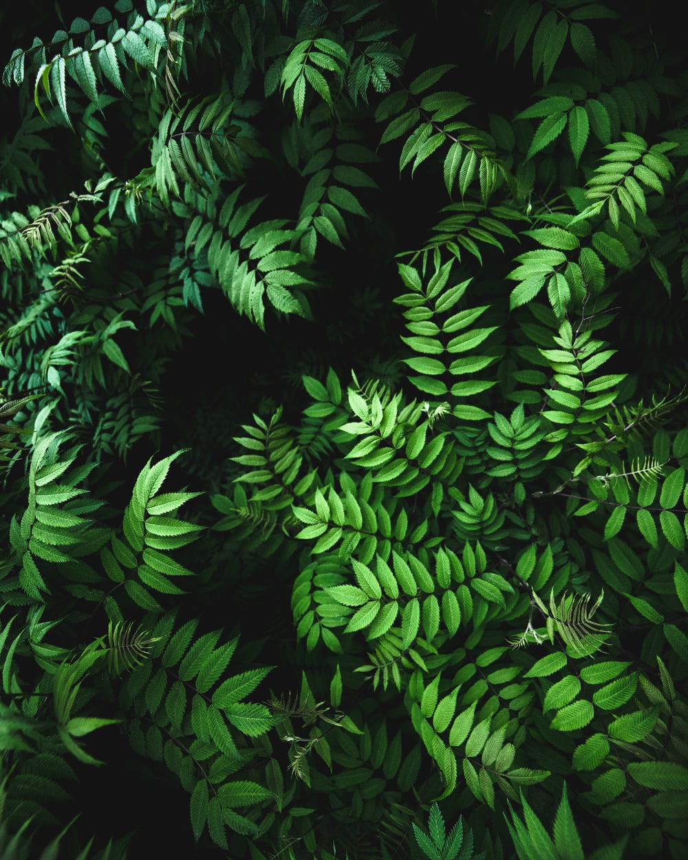 close up photo of green fern plant